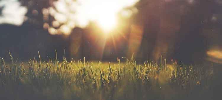 sunlight on the garden