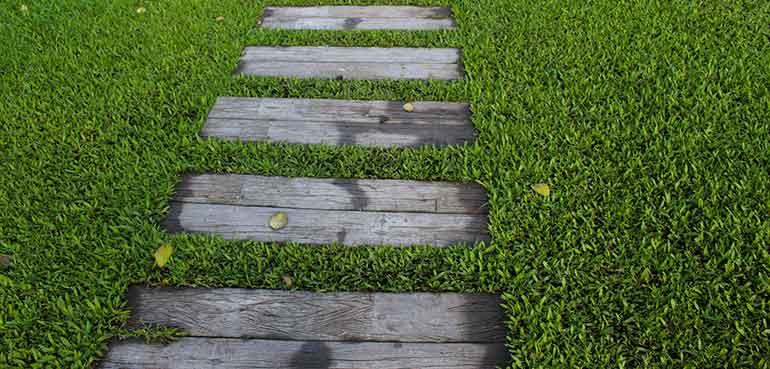 Apply Milorganite To The Lawn