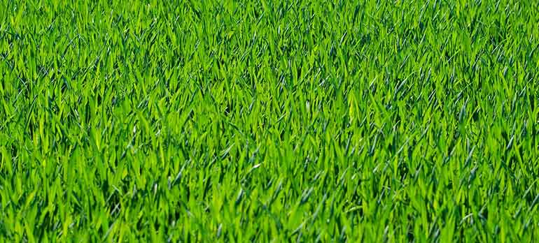 How To Keep Lawn Green In Summer Heat?