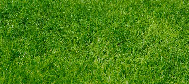 overseed lawn without aerating