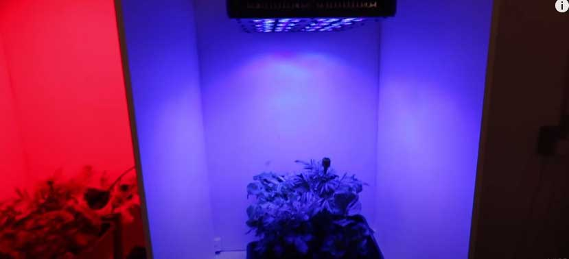 does the color of light affect plant growth