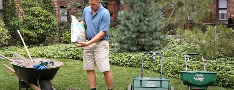 fertilizer on new grass