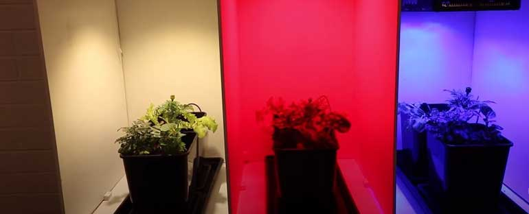 how does light color affect plant growth