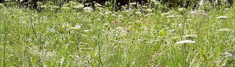 how to get rid of weeds without killing grass