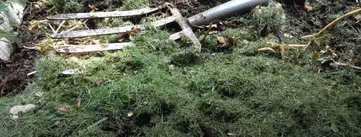 compost with grass clippings