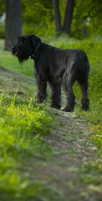 muddy dog trail