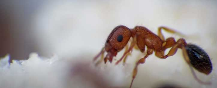 a single ant close look