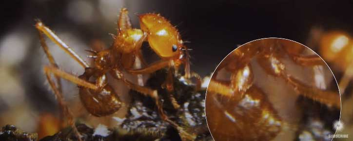 ant fun facts