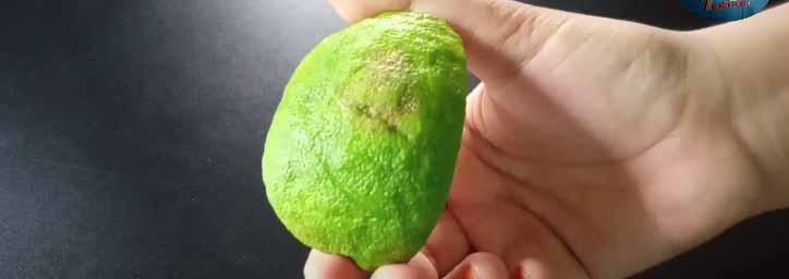 Ginger Limes