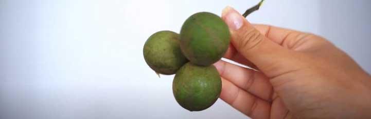 Spanish Limes