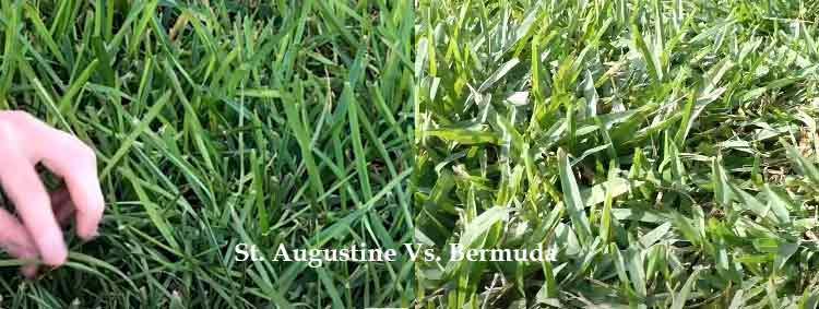 bermuda grass Vs. St. augustine