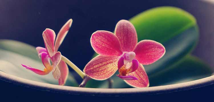 orchid plant care