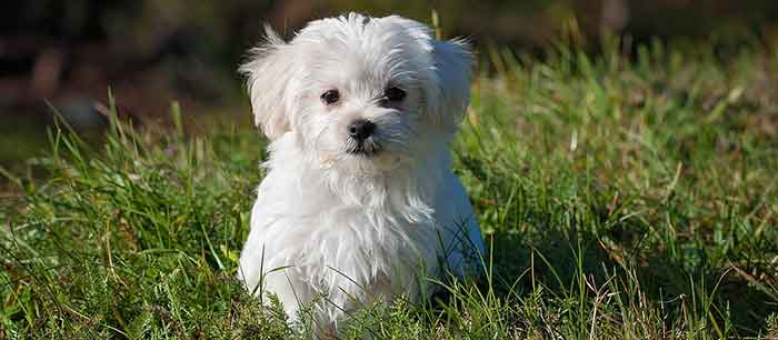 cut dog on lawn