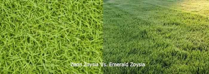 Zeon Zoysia Vs. Emerald Zoysia
