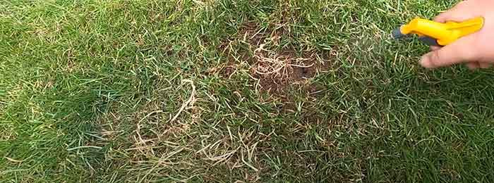 fixing damaged grass from dog urine