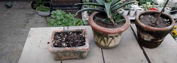 how to clean mold off Terracotta pots